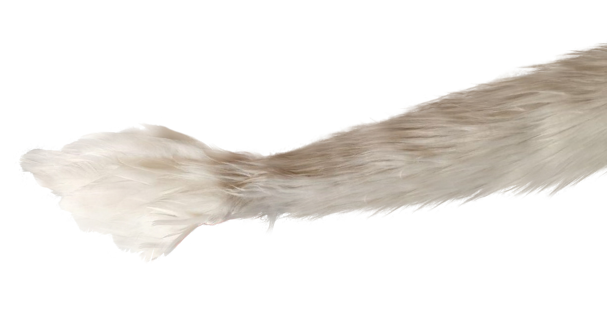 gryphon tail by the tail company